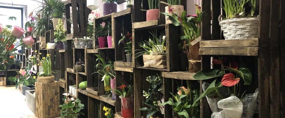Fleurs-et-cadeaux-Jardin-Eloise-Gouzeaucourt